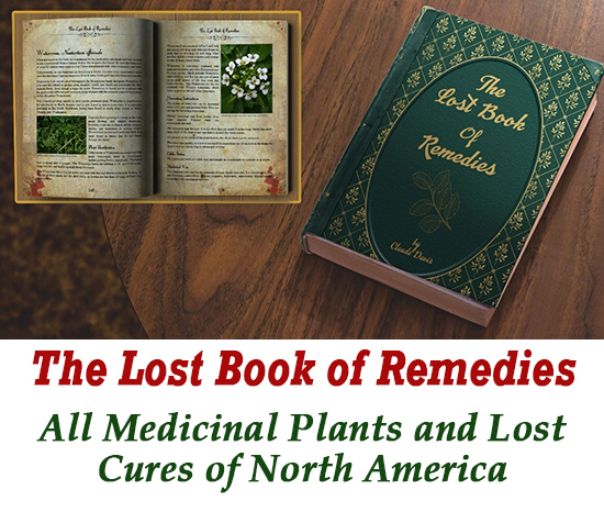 herbal medicine remedies