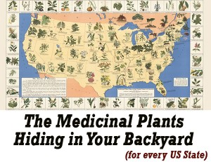 History Of Herbal Remedies In The Us